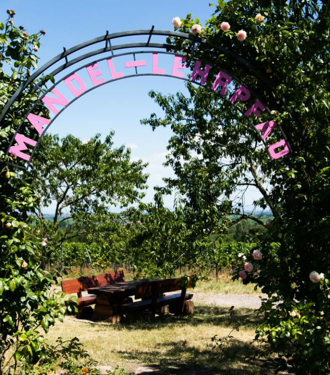 Heiraten in Gimmeldingen Mandelblüten Lehrpfad